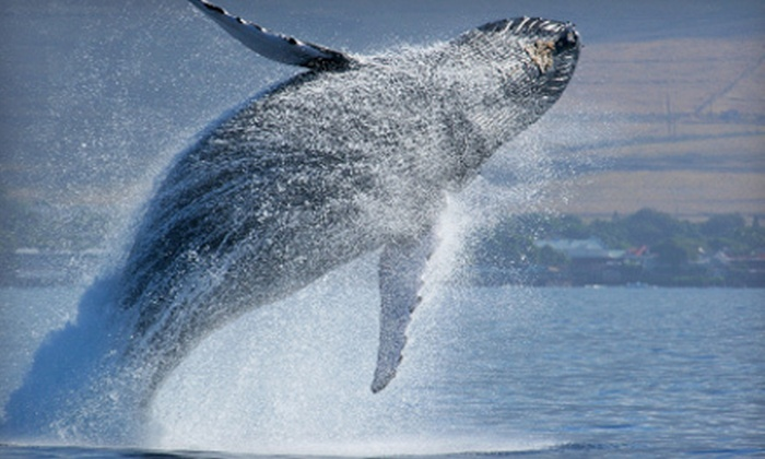 Odyssey Whale Watch - Downtown: Whale Watching Cruise for Two or Four from Odyssey Whale Watch (Up to 48% Off)