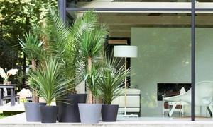 3 Palmiers 3 variétés + Engrais