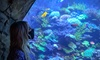 Up to 21% Off Admission to SeaWorld San Diego