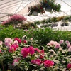 Up to 55% Off Plants at Jo-Ann's Gardens in Wells