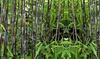 Set de plantas de bambú