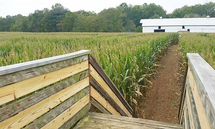 Maize Quest at Bridgemont Farm - Maize Quest at Bridgemont Farm: Corn Maze for Two or Four at Maize Quest at Bridgemont Farm (Up to 46% Off)