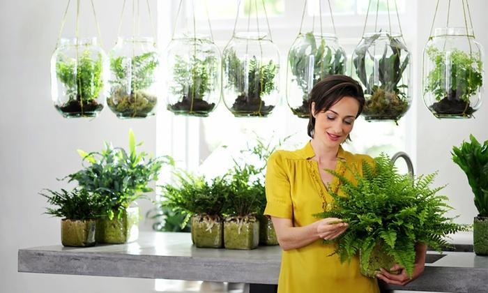 plante d 39 int rieur purifiante groupon shopping. Black Bedroom Furniture Sets. Home Design Ideas