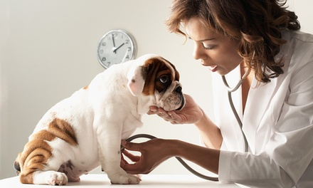 Dog Boarding, Doggie Day Care or Veterinary Exam at Sun Devil Animal Hospital and Pet Resort (Up to 50% Off)