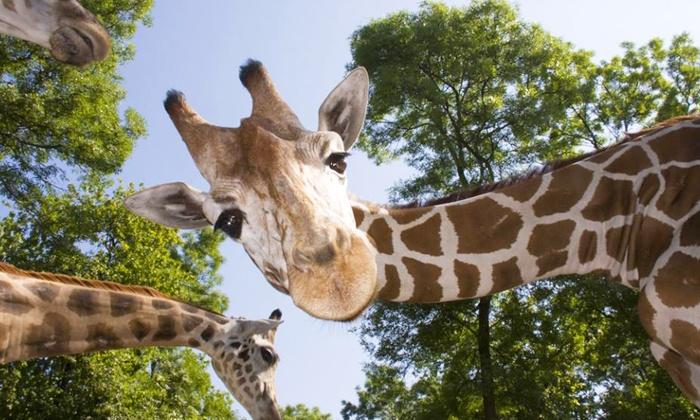 Timbavati Wildlife Park - Sauk Hill: Admission for Two or Four to Timbavati Wildlife Park (Up to 31% Off)