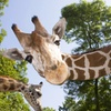 Up to 28% Off Admission to Timbavati Wildlife Park