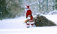 Wertgutschein über 15 € anrechenbar auf Weihnachtsbaum und 2 Getränke und 2 Würste bei Krämerwaldhof (40% sparen*)