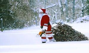 Krämerwaldhof: Wertgutschein über 15 € anrechenbar auf Weihnachtsbaum und 2 Getränke und 2 Würste bei Krämerwaldhof (40% sparen*)
