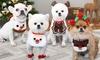 Pet Christmas Bib