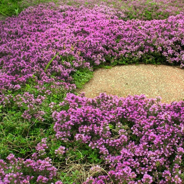 Up To 72 Off On Thyme Pre Seeded Mat Groupon Goods