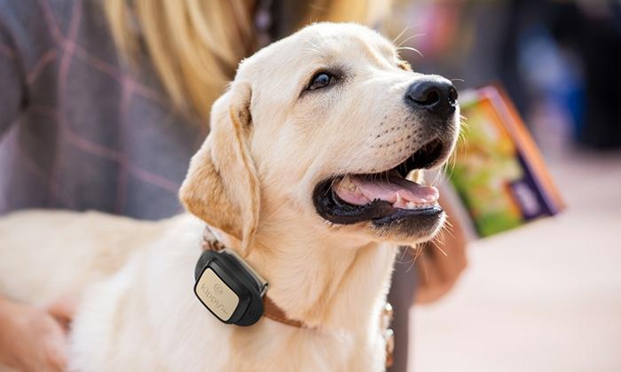 GPS-Hundetracker mit Vodafone SIM