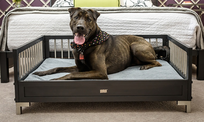 Groupon Dog Bed Deal