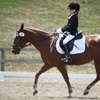 Reddemeade Farm - Ashton-Sandy Spring: $60 Toward Equestrian-Lesson Package