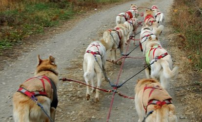 image for Three-Hour Fall Dog Cart Adventure for One or Two at Hilltown Wilderness Adventures (Up to 72% Off)