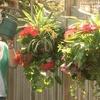 Betta Basket Hanging Plant Pots (2-Pack)