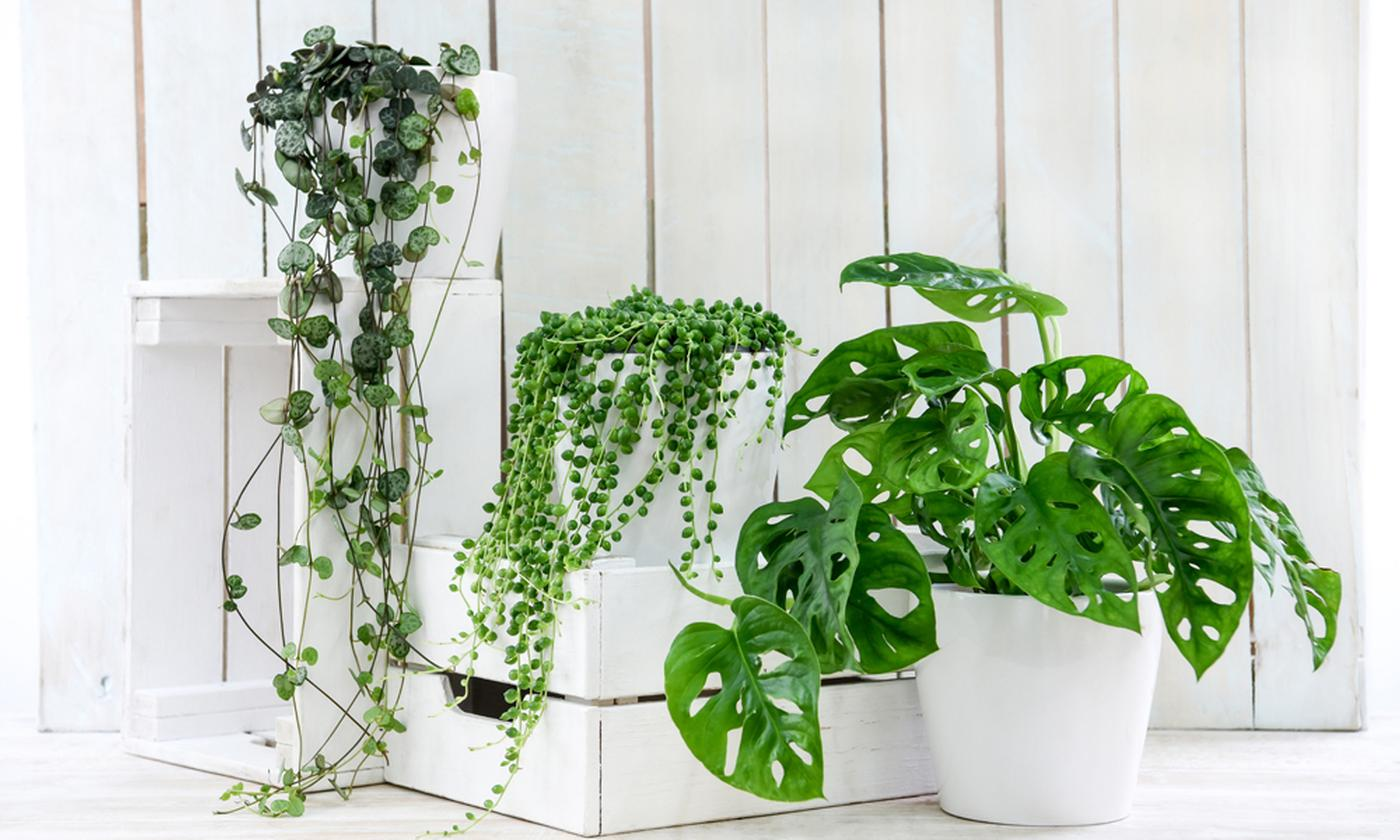 Three- or Six-Piece Hanging Plant Collection