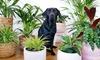 Set di 4 piante da interno