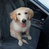Autoschutzdecke für Hunde