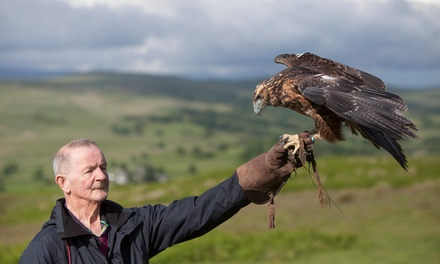 Wings of Wales