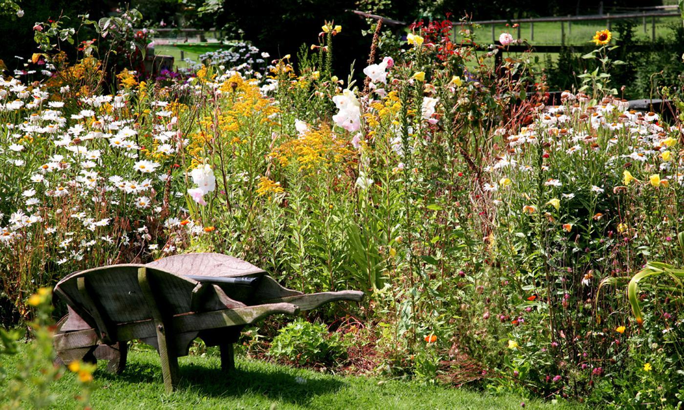 Country Garden Perennial Collection: 12 or 24 Plants
