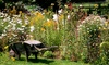 Garden Perennial Collection