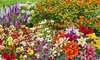 Pre-Order: Butterfly-Attracting Perennial Bare Root Plants (30-Pack)