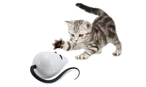 FroliCat Interactive Cat Toys