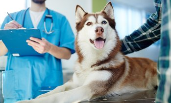 Veterinary Services for Pets