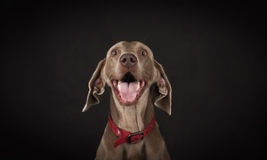 "Peter Thomas Photography: One-Hour Pet Photoshoot with two 8"" x 6"" Prints and a Digital Image by Peter Thomas Photography"