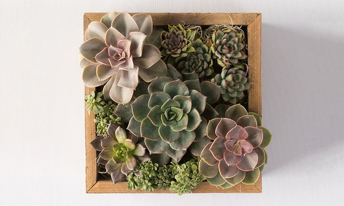 Reclaimed succulent centerpiece 100 handmade in usa for Plante 94 pourcent