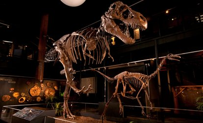 image for General Admission for 2, 4, or 6 at Houston Museum of Natural Science at Sugar Land (Up to 35% Off)