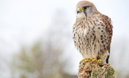 image for Children's Workshop and Falconry Experience at Shropshire Falconry