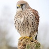 Children's Falconry Experience