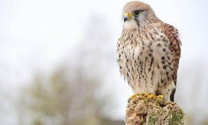 Shropshire Falconry: Children's Workshop and Falconry Experience at Shropshire Falconry
