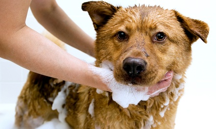Self-Service Dog Wash, or Grooming for a Small, Medium, or Large Dog at Dog Wash Depot (Up to 51% Off)