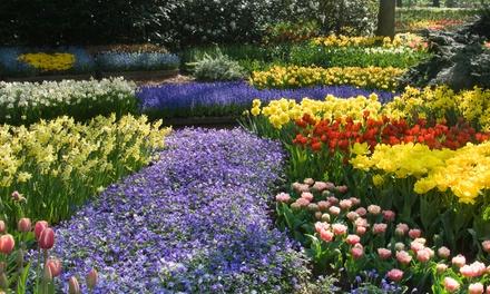 100 or 200 Spring Flowering Bulb Bonanza