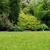 50% Off Lawn Fertilization and Weed Control Application