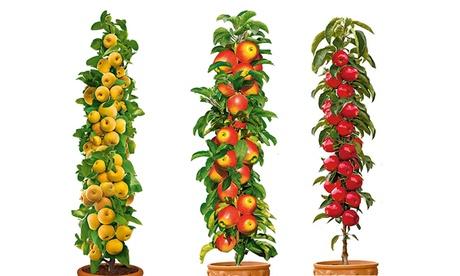 Set de 3 o 6 árboles de manzana