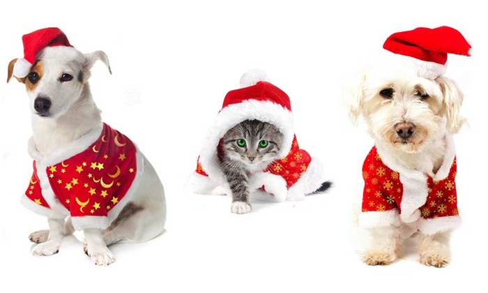 Vestito di babbo natale per animali groupon goods for Animali a natale