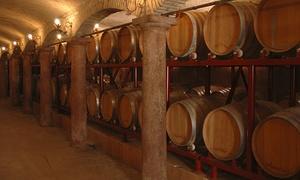 Azienda Agricola Moletto: Degustazione vini, spritz e olio con tour multilingue all'Azienda Agricola Moletto, a Motta di Livenza