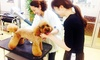 P.S.Sアカデミー - P.S.Sアカデミー: 85%OFF【1,000円】愛犬にこそ、ご褒美を。癒しとフワフワの毛づくろい≪トリミング+ミストサウナ≫15kg未満 @P.S.Sアカデミー