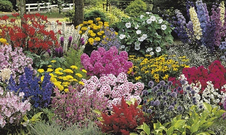 5, 10 or 15 Potted Border Plants