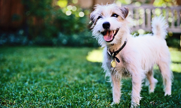 Wag Hotels - Multiple Locations: $99 for 5-days of Summer Camp for One Dog at Wag Hotels ($235 value)