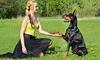 iMounTEK Rechargeable Remote Vibration and Shock Dog Training Collar