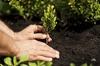 50% Off Planting / Tree / Nursery