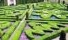 1, 2 ou 4 lots de 6 plantes spéciales haies, 'Buxus Sempervirens'