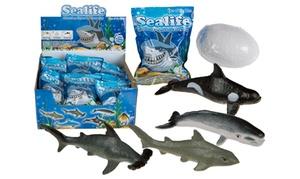 Œuf à faire éclore requin OOTB