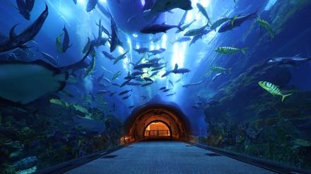 Explorer Experience for Up to Four at Dubai Aquarium & Underwater Zoo