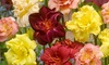 Double Daylily Bare Root Plants (4-Pack): Double Daylily Bare Root Plants (4-Pack)