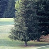 Up to 31% Off Round of Golf at Prairie du Chien Country Club
